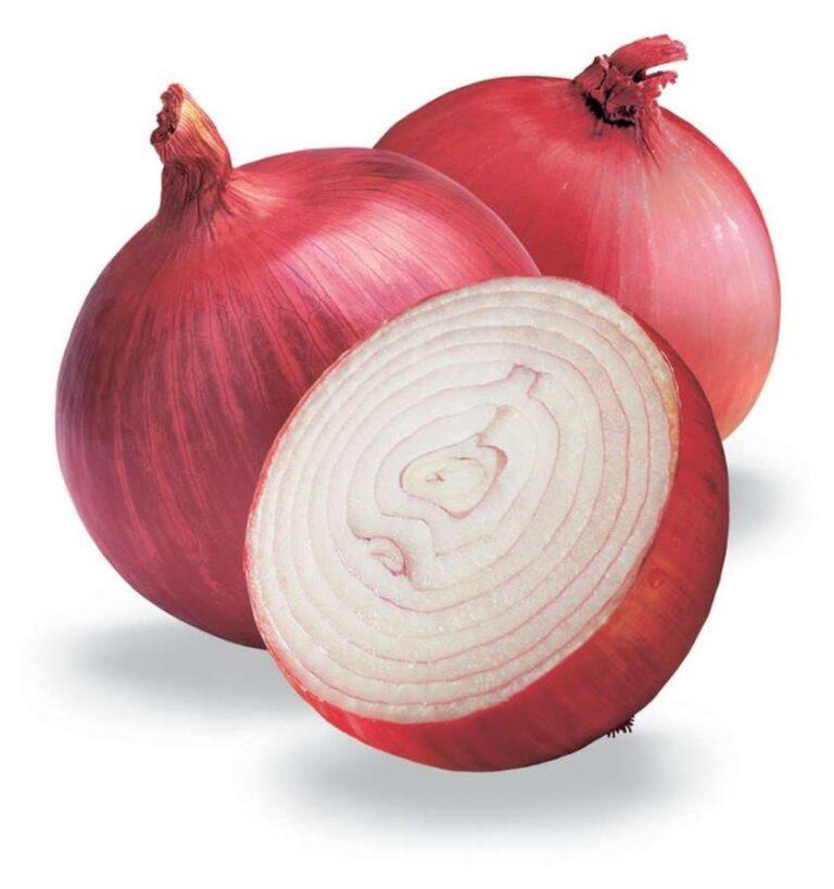 Cipolla Rossa Tonda