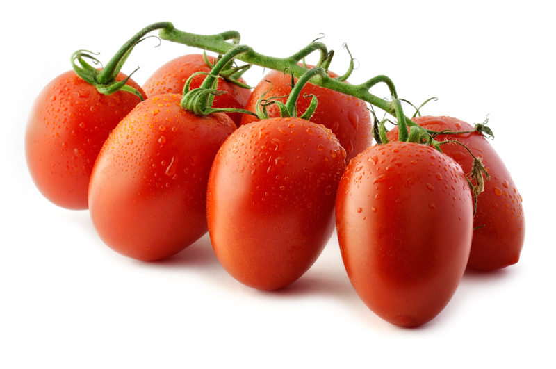 Bunch of Piccadilly tomatoes on white background. Piccadilly is a plum tomato variety. Plum tomatoes are full and rich in pulp. They are high in sugar content and do not burst on cutting so they can be sliced horizontally or across (producing cubes or round slices). Moreover, they are also suitable for the preparation of sauces.